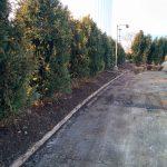 Tree Planting mundelein il